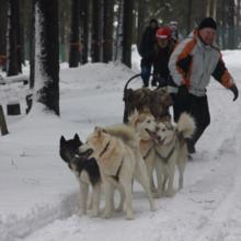 зимний тимбилдинг, зимний корпоратив, зимние программы, новый год на природе, заказ хасок
